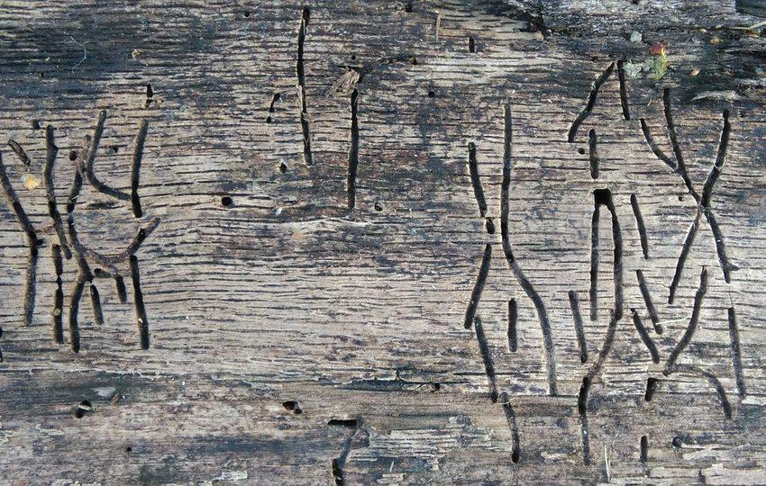 houtwormen bestrijden den bosch