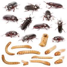 motmuggen bestrijding